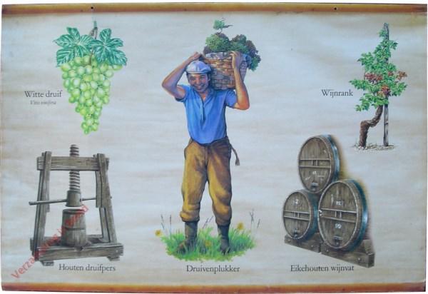 [Kleinfruit, Wijnbouw]